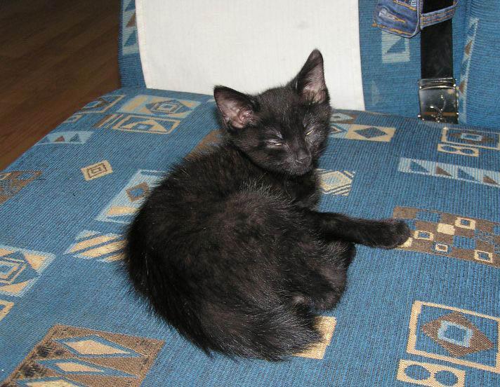 Černá kočička kontrakce