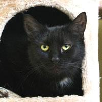 Černá kočička rty obrázek