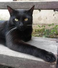 sníst mou velkou černou kočičku