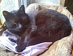 Bílá kočička nebo černá kočička