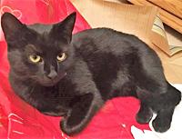 Černá kočička pro bílé muže