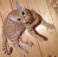 Pošlete vyholenou kočičku