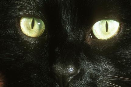 sexy kočička mokrý