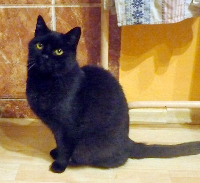 Vesnice černá kočička