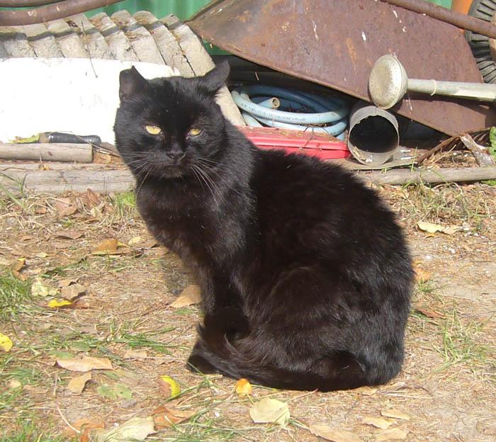 Černý kočička trest