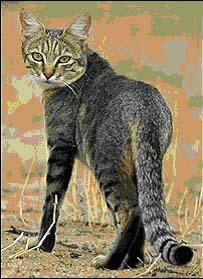 Africké kořist kočička
